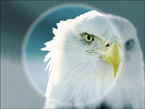 ImPower_Eagle_small